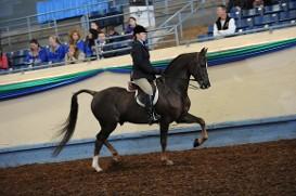 Woman Astride a Horse, Equine Farm